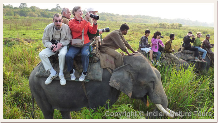 Guests enjoying Elephant Safari, Kaziranga National Park, April 2011