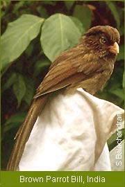 India Endemic Species of birds