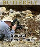 Butterfly - Special Interest Tours