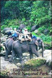 Elephant Safari - Corbett National Park, Wildlife India Tour