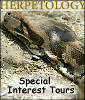 Herpetology - Special Interest Tours