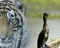 Darter, Bhartpur Bird Tour, Birding Tour in India, India Birding Tour,