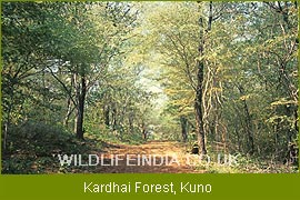 essay on wildlife and forest conservation