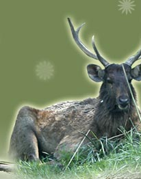 Male Deer - Bharatpur, Wildlife Tour Package