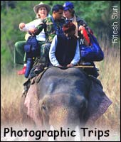 Photographic Trips, Wildlife Tour India, Indian Wildlife Tour