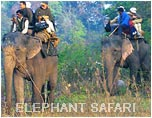 Elephant Safari - Corbett, Wildlife Tour India, India Wildlife Tour