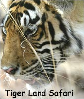 Tigerland Safari, Wildlife Tour India