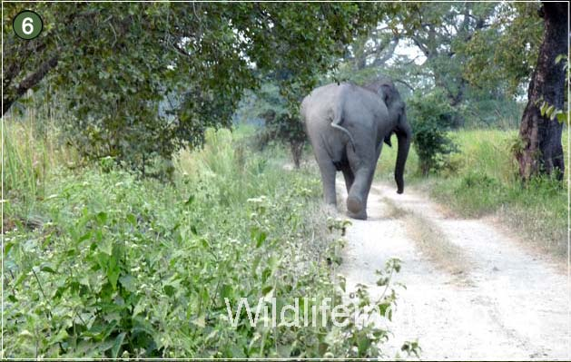 Elephant at Kaziranga National Park