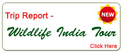 Wildlife India Tour